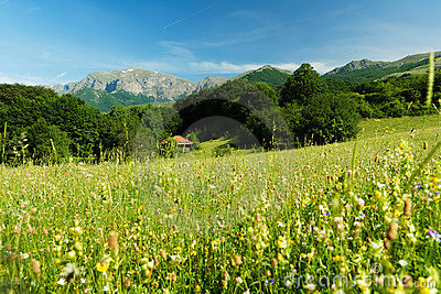 Spring landscape with mountains