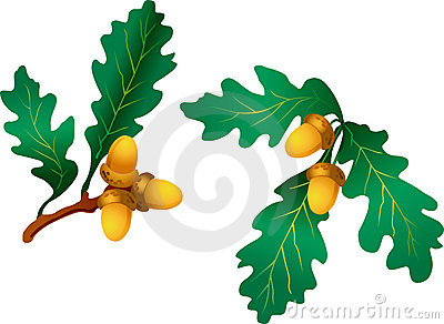 Branch with oak leaves