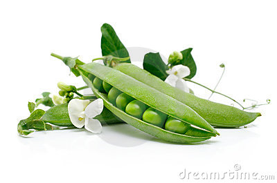 Fresh green pea  in the pod with flowers