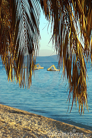 Palm tree and pedal boats