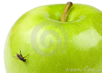 Apple and Fly