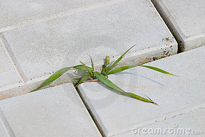 Sprout of grass in the pavement