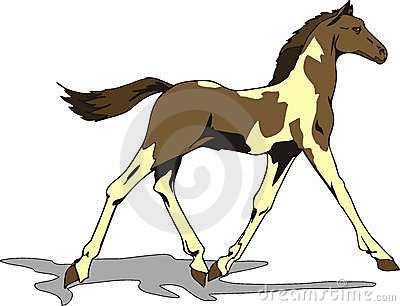 Beautiful foal drawing, color