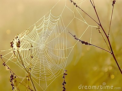 Spiders web at autumn sunrise