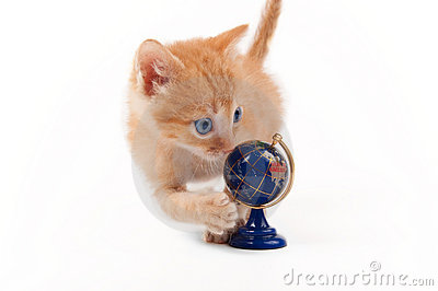 Orange kitten with a globe