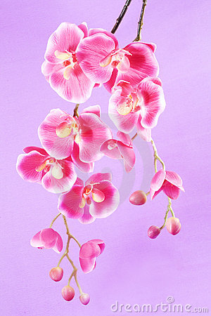 Orchid on a purple background