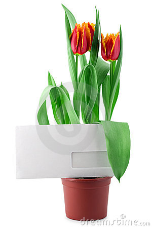 Envelope in tulips