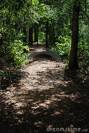 Shaded path in the woods
