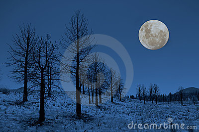 Moon and Trees in the Sierras