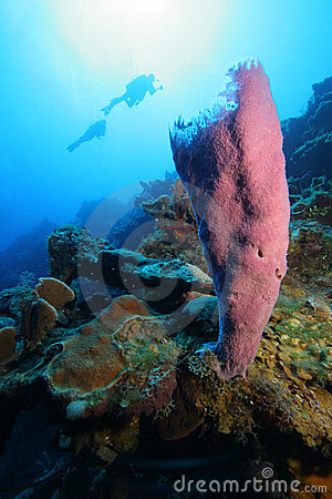 Divers and tropical coral reef