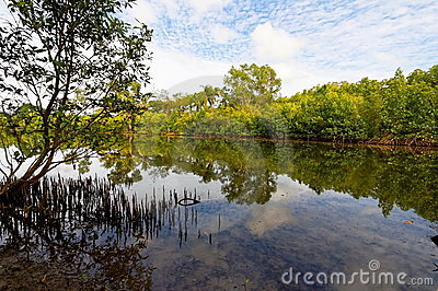 Tropical mangrove swamp with reflection