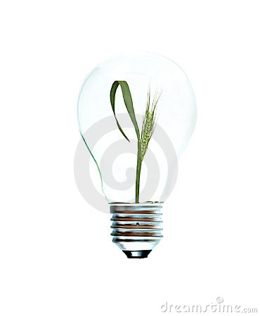 Incandescent light bulb with a wheat plant