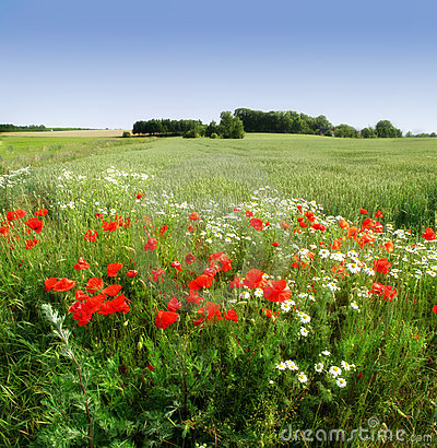 Flowers and countryside