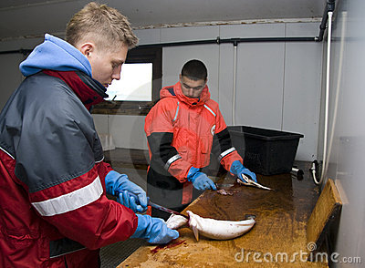 Workers filleting fish