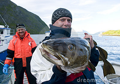 Fisherman with giant cod