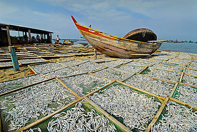 Drying anchovies at a fishing village