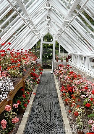 Interior Of A Traditional Greenhouse