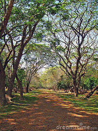 Country Pathway