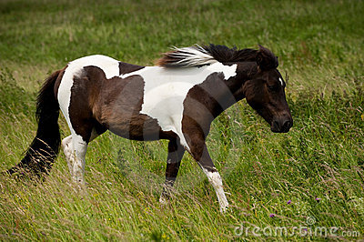 A brown white horse