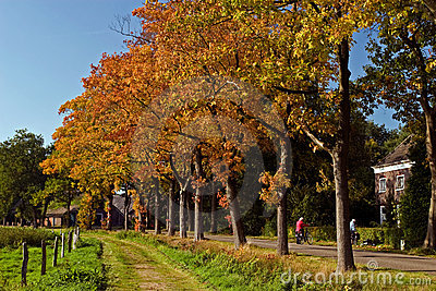 Landscape in autumn of a road with trees