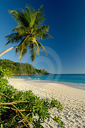 Beautiful white sand beach with palm tree