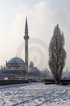 Mosque and poplar tree in winter
