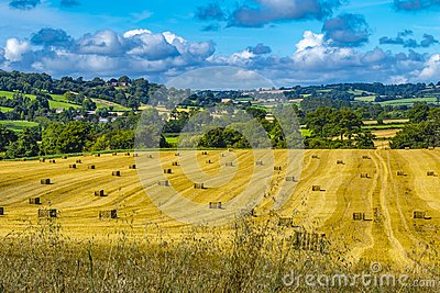 Shropshire Country side. Hay bales lovely rolling golden fields and blue sky