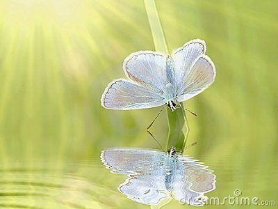 Butterfly on a grass in spring