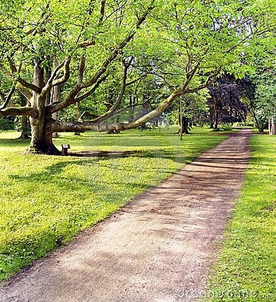 Park and very old tree