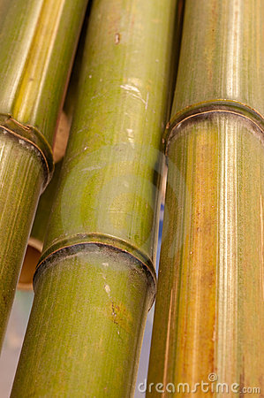 Close up of bamboo
