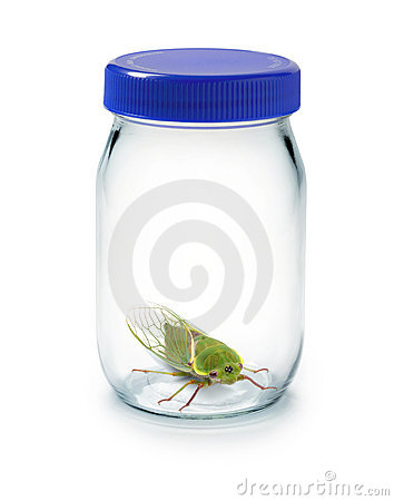 Bug Insect Glass Jar