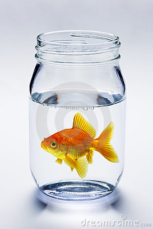 Goldfish In Jar