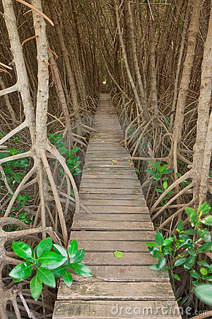 Wood bridge in mangrove forest, Thailand