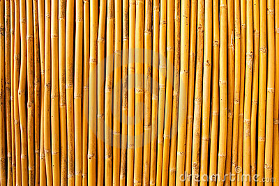 Tropical bamboo fence