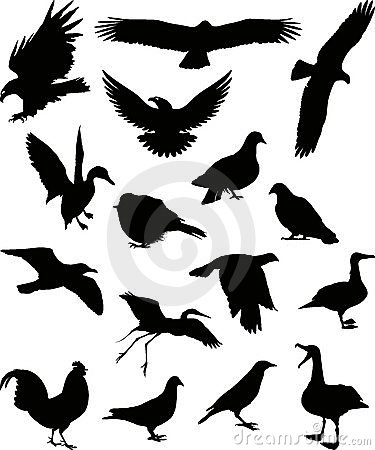 Birds silhouette 1 (+ vector)