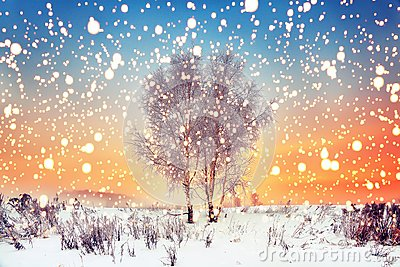 WInter Christmas background. Magic snowflakes fall on snowy meadow with trees. Xmas landscape