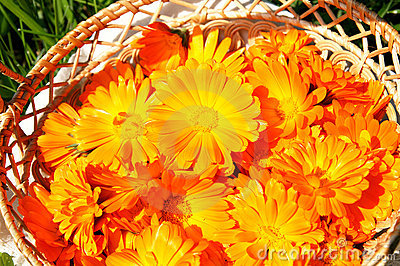 Basket with bright orange marigolds