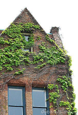 Ivy covered brick building