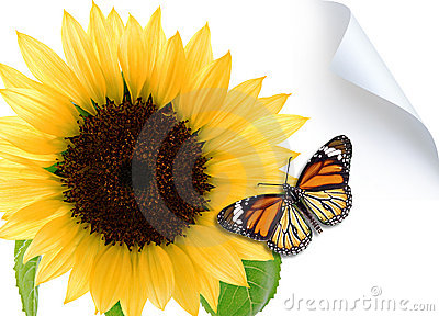 Butterfly on the sunflower