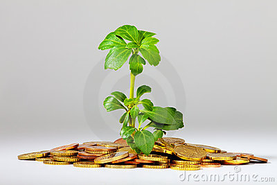 Growing Tree on a heap of money