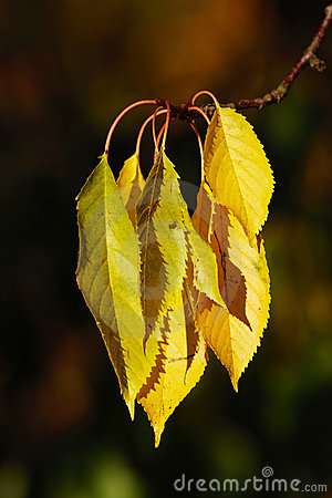 Fall leaves - very SHARP