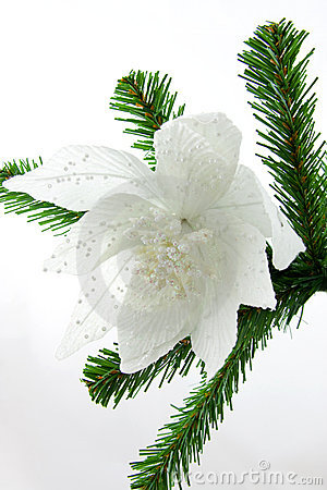 Beautiful white flower on christmas tree