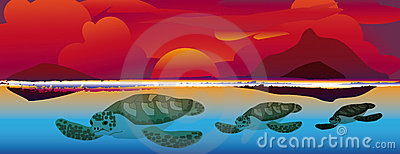 Sunset swimming sea turtles