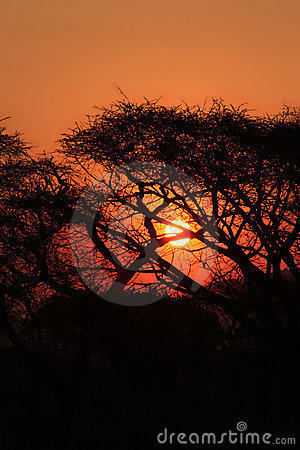 Tropical sunset in african bush