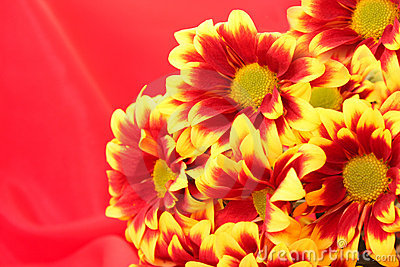 Flower on red background