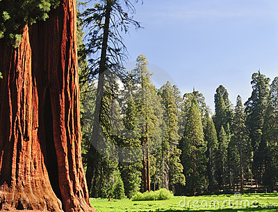 Sequoia National forest, CA