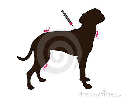 Dog gets an immunization