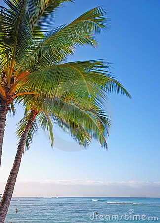 Tropical palm and sea