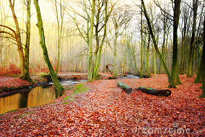 Forest in the fall - small river and sun