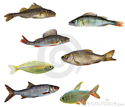 Seven isolated fishes